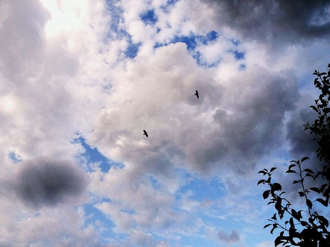 Be like a bird - free. Xiao Hamster