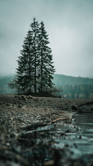 Tree Plant Tranquil Scene Tranquility Land Nature Sky Scenics - Nature Non-urban Scene Beauty In Nature No People Forest Day Environment Fog Water Winter Cold Temperature Outdoors Pine Tree Coniferous Tree Surface Level