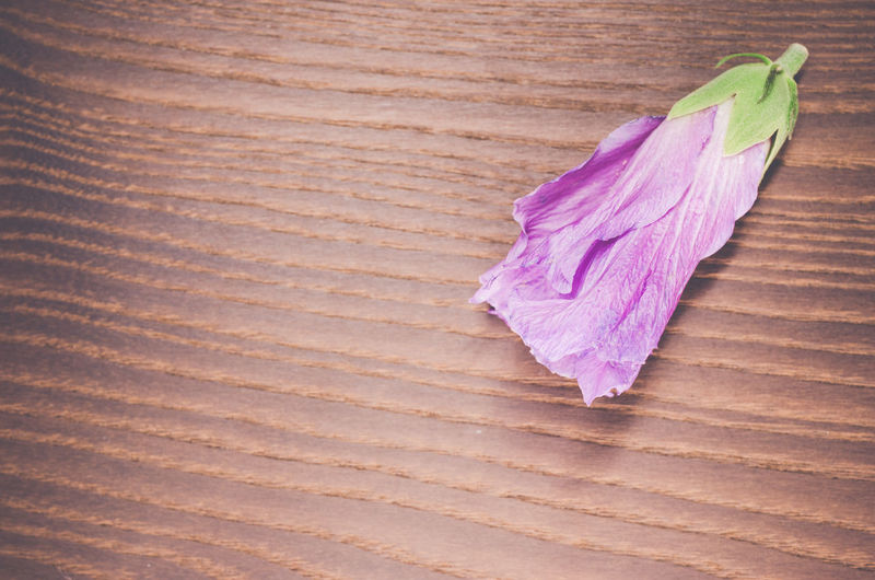 hibiscus sprout - wood background Blooming Blue Close-up Colorful Day Hibiscus Flower Multi Colored Nature_collection No People Pink Color Purple Still Life Stillife Top Perspective Top View Wood - Material Wooden