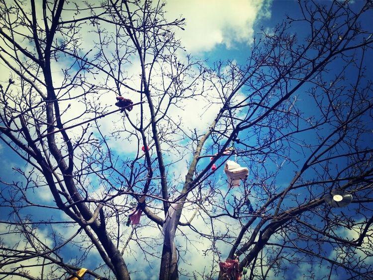 Enjoying The Sun Tree And Sky