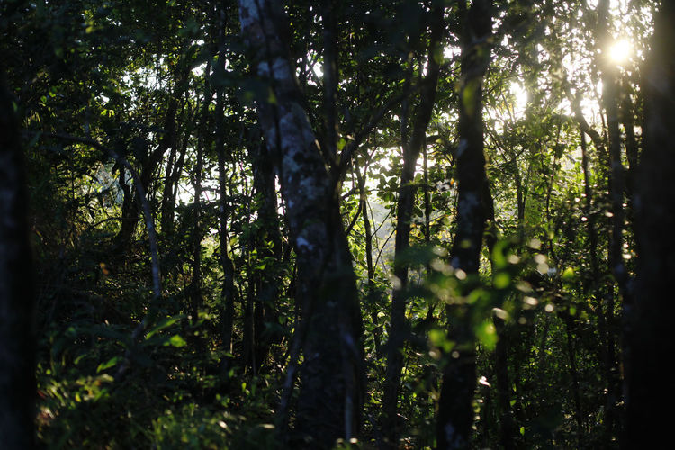 El Valle Panorama Tree Plant Forest Land Growth Sunlight Nature Beauty In Nature Tranquility Tree Trunk Trunk WoodLand Day No People Green Color Outdoors Scenics - Nature Non-urban Scene Tranquil Scene Environment Streaming Rainforest