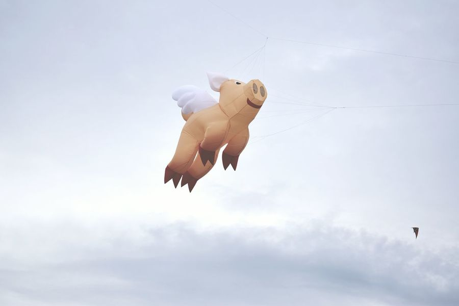EyeEm Selects Flying Motion Mid-air Sky Animal Themes The Week On EyeEm Flying In The Sky Flying Pigs Pig