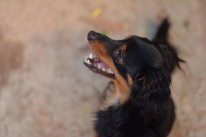 Beatiful Dog Beatiful View Black Dog Charlierose Little Dog Model Dos My Year My View Perro Ratero De Mallorca Pretty Dog Small Dog