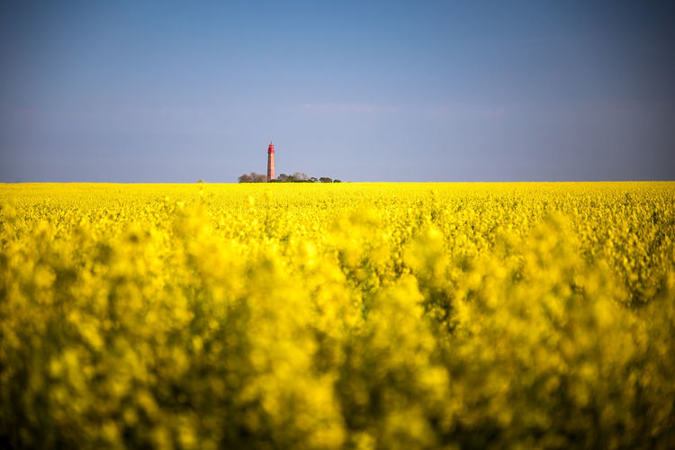 Baltic Sea Deutschland Ostsee Rapsfeld Strand Water And Sky Beach Canola Canola Field Fehmarn Germany Rape Seed Fields Raps Sailing Springtime