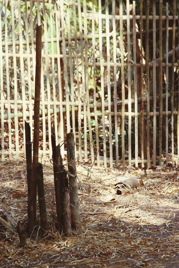 Dry Leaves Bamboo Bamboo Fence Outdoors No People Local Life in North Thailand South East Asia