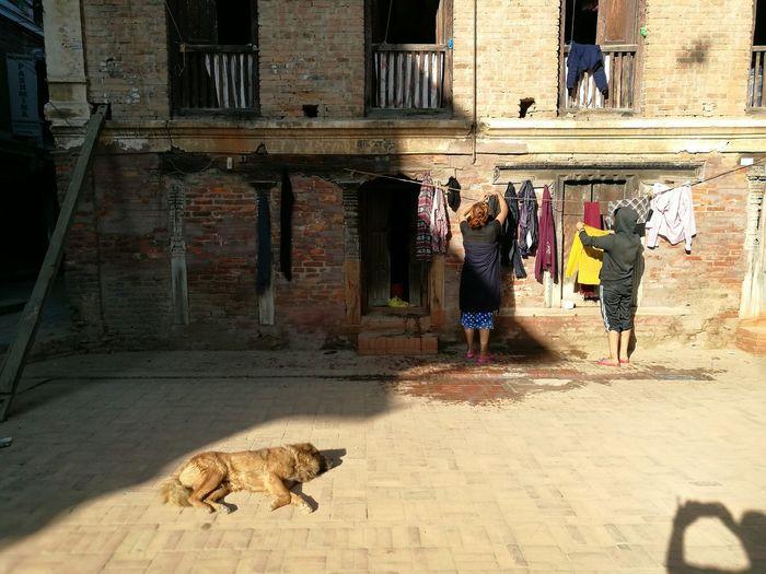 Drying... Real People Lifestyles Street Sunlight Dog Katmandhu Nepal Travel EyeEm Best Shots EyeEm Gallery Street Photography Streetcolour Streetphotography Streetphoto
