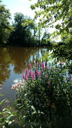 Scerenity Scerenity Peaceful Waters Calm Water Calmness Riverside Outdoor Photography Outdoors Beauty In Nature