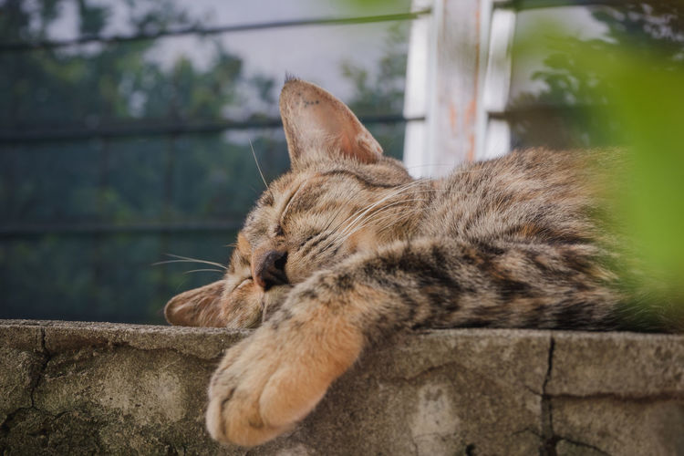Close-up of a cat sleeping on retaining wall