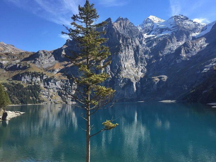 Swiss, Berner