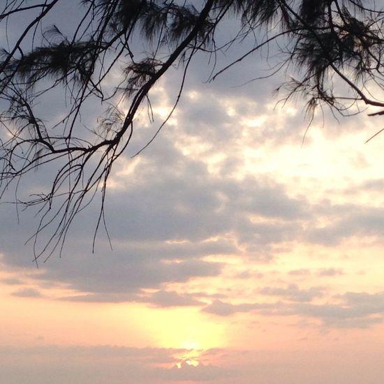 Trees Long Holiday Sunset Traveling