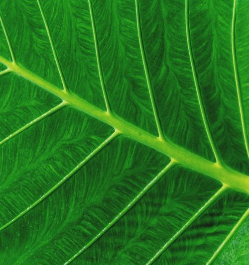 Leaf Green Color Full Frame Growth Backgrounds Beauty In Nature No People Plant Nature Pattern Leaf Plant Part Tranquility Natural Pattern Day Land Outdoors Environment Leaf Vein Close-up Scenics - Nature