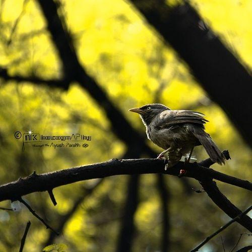 Photography Travelling Indroda Bird backdropcanon60dperfectoframedNKphotographypassionate