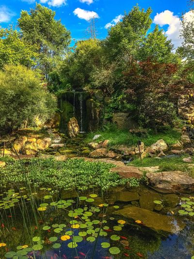 Showcase July Taking Photos Enjoying Life Nature Scenery Shots Beautiful Nature Photography Nature_collection Landscape_photography Waterfall