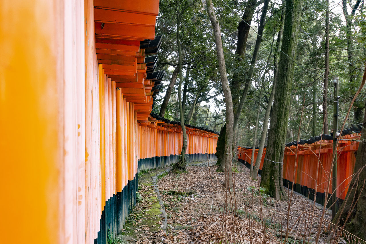 architecture, built structure, no people, orange color, tree, nature, building, plant, day, direction, building exterior, the way forward, outdoors, in a row, footpath, multi colored, growth, land, forest, transportation, shrine