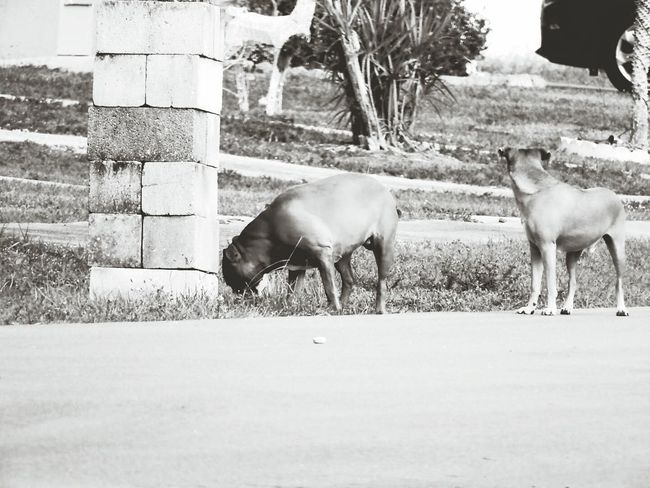 Stray Dogs Strays Wild Dogs Mammal Miles Away Lieblingsteil EyeEm Best Edits EyeEm Gallery EyeEm The Week On Eyem The Week Of Eyeem The Week On EyeEem Eyemphotography EyeEm Masterclass Eye4photography  Eyeemphoto EyeEmBestPics EyeEm Best Shots EyeEmNewHere Uniqueness No People Black & White Photography EyeEm Best Shots - Black + White Black & White Blackandwhite
