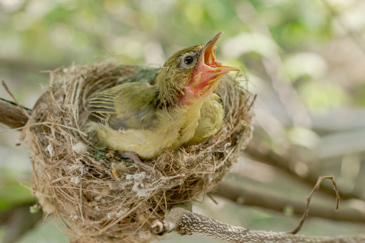 Close-up of bird perching on nest