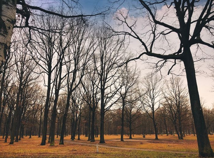 Bare trees on field during autumn
