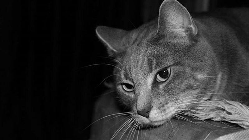 Mein Cat Katze Schwarzweiß Wunderschön Lovly Beautiful Photoshoot Happy Wunderschöner Lieb Photograph Stolz Photo