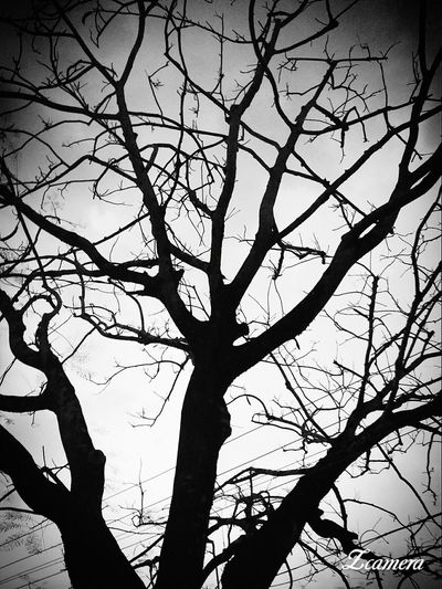 leafless tree.. Tree Nature Black And White EyeEm Nature Lover Leaflesstree Bestphoto EyeEm Best Shots Eyeemphotography Bestblackandwhitepics White Background Adapted To The City