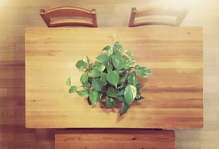 Plant Plants Foliageplant 植物 観葉植物 Fridayafternoon Friday Table Chair Bench Wood WoodChair Woodtable Woodbench Instagood Instagoo Instagoodmyphoto テーブル 椅子 長椅子 金曜の午後 お昼寝したい