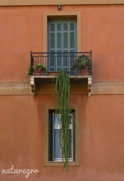 Building Exterior Architecture Window Built Structure House Outdoors No People Plant Day Cactus Plant Nature Nature_collection Closeup EyeEmBestPics Eyeemphotography Photooftheday Nature Photography EyeEmNewHere EyeEm Best Shots Colors Orange Color Green Freshness City