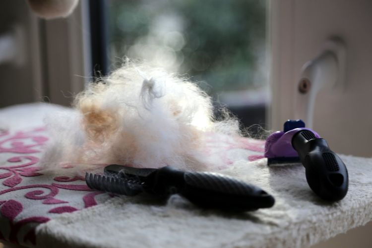 Ciratus Cat Cirratus Close-up Cutting Cats Hair Cutting Fur Day Indoors  Katze Fell Scheren Kr No People Pets Scherer Selkirk Rex Sellkirk Rex Wolle