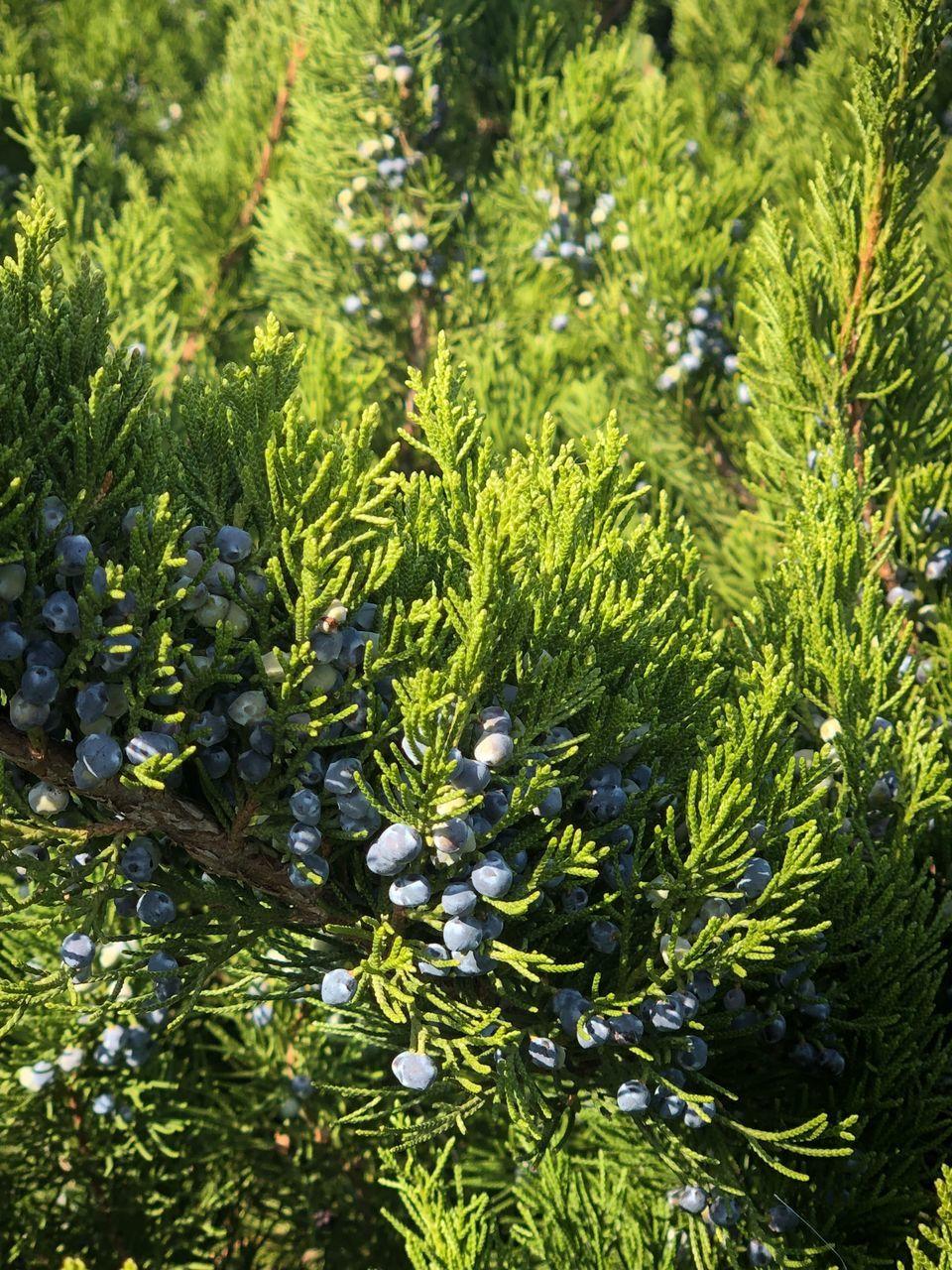 FULL FRAME SHOT OF PLANTS GROWING ON LAND