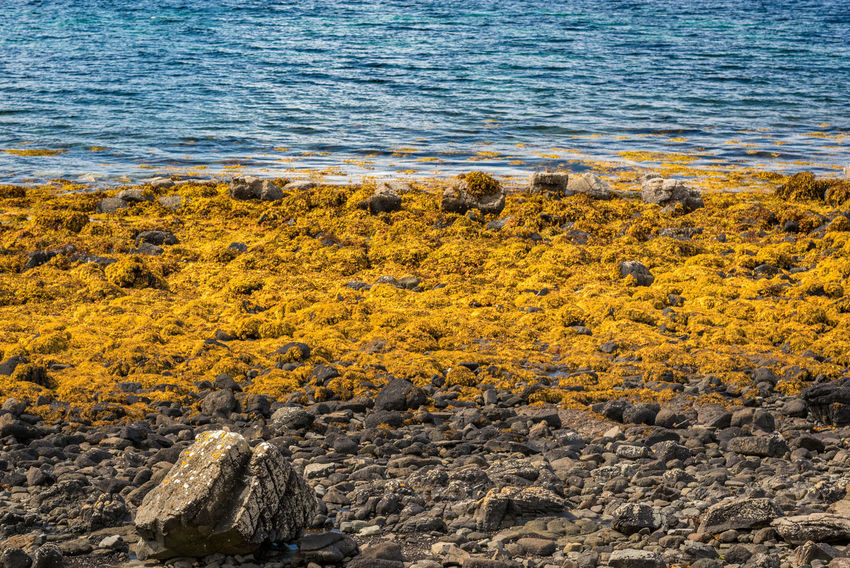 Coral Beach, Isle Of Skye Scotland Beach Beauty In Nature Day High Angle View Nature No People Outdoors Sea Water Yellow
