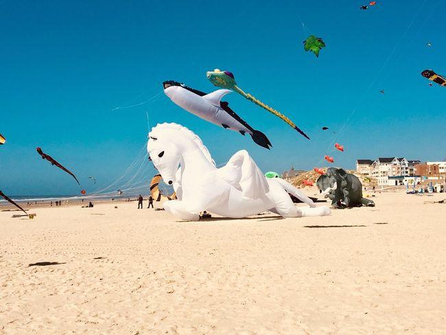 Kite festival. Berck Plage White Color Pegasus Elephant Shark Kite Festival Kite Childhood No People Sky Land Sand Nature Beach Blue Sunlight Sky Land Sand Nature Beach Blue Sunlight Day Clear Sky Outdoors White Color Leisure Activity