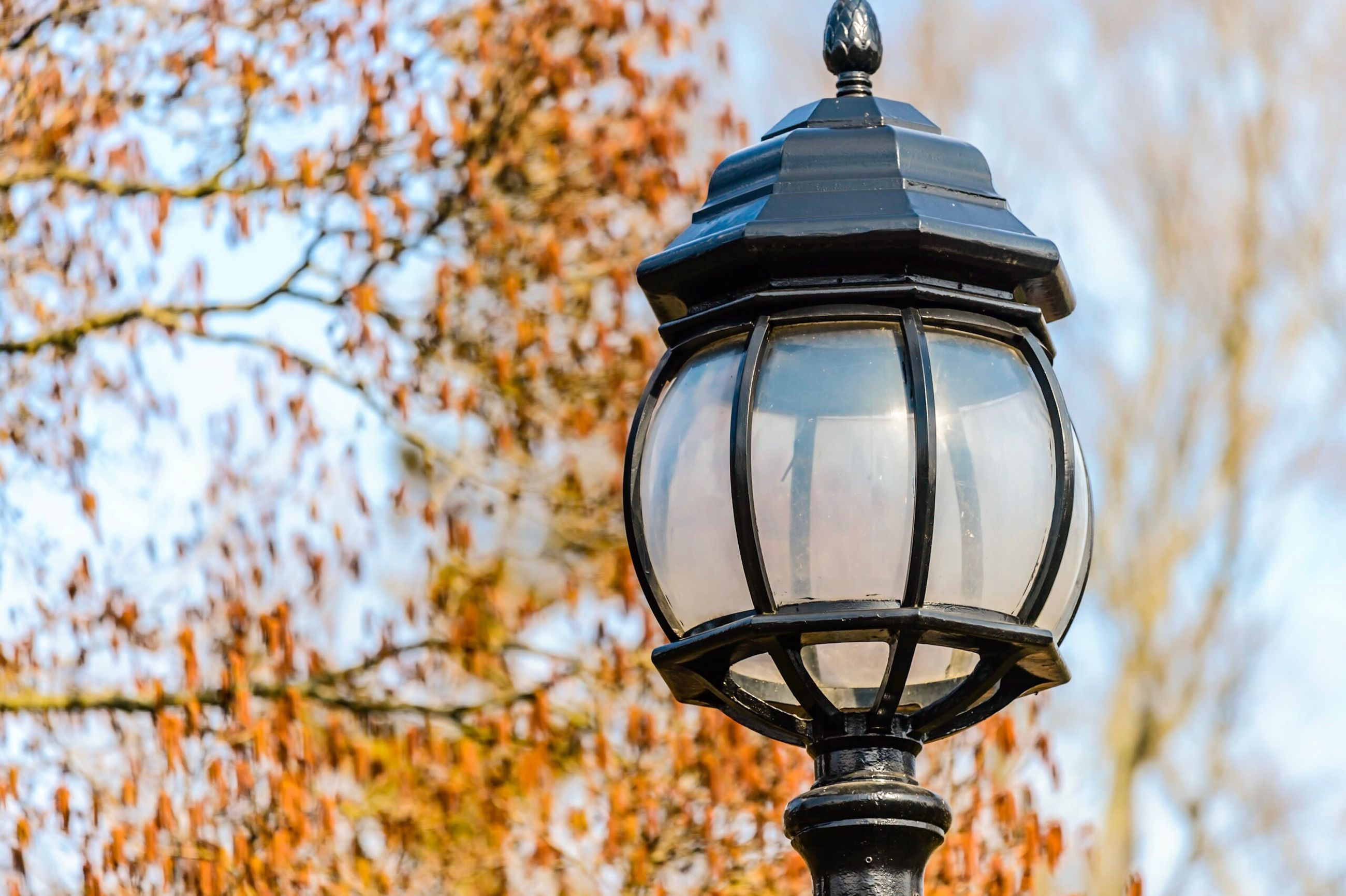 low angle view, lighting equipment, sky, outdoors, no people, old-fashioned, bare tree, gas light, city, nature, beauty in nature, architecture, day