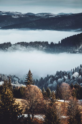 Landscape_Collection Nature Beauty In Nature Cold Temperature Day Fog Forest Hazy  Idyllic Landscape Mist Mountain Mountain Range Mountains Nature Nature_collection No People Outdoors Scenics Sky Snow Tranquil Scene Tranquility Tree Winter