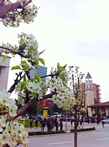 Tirana Albania The Places I've Been Today Slightly Out Of Focus I ❤️ Tirana Clock Tower City Spring Flowers Flowers Trees