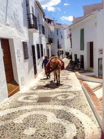 White Village Donkey Cobblestones Holiday Memories Scenery Buildings SPAIN Andalucía man walking donkey through street Tradition Frigiliana