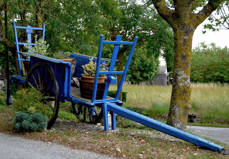 Beauty In Nature Blue Blue Wagon Grass Nature Old Wagon Outdoors Tree Wagon  Wood - Material