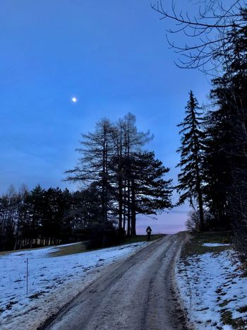 Snow Winter Cold Temperature Nature Tree The Way Forward Road Weather Tranquility Scenics Moon Beauty In Nature Outdoors Transportation Tranquil Scene Bare Tree Landscape Day No People Sky Shades Of Winter