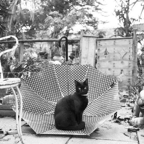 Cat Blackandwhite BLackCat Catsofinstagram Blak And White
