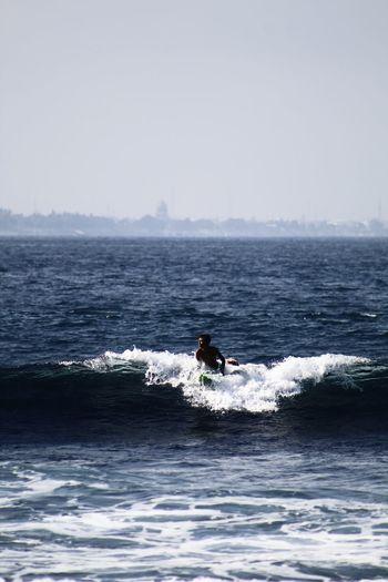 Surf Humpback
