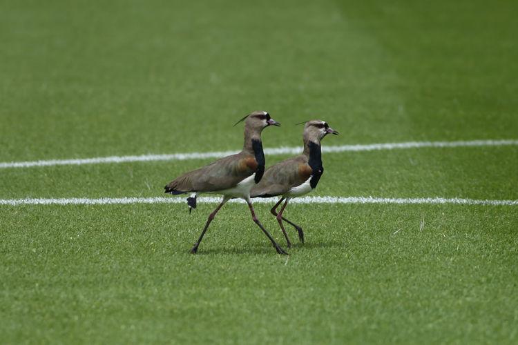 Flock of birds on grass