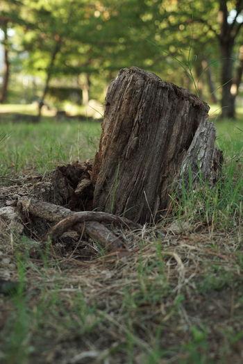 Tree stump on field in forest