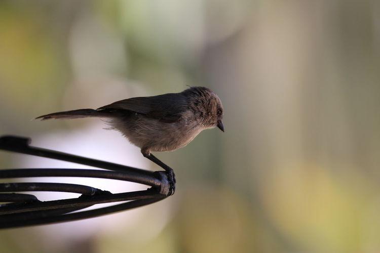 Close-up of bird perching on a metal