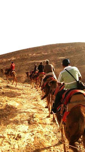 Isrrael Isrrael Camello Sunset Family