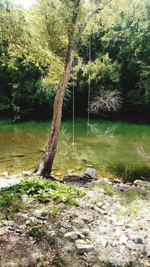 Tennessee Green Color Beauty In Nature Rocks And Water Rocks, Boulder, Stone, Pebble Branch Swinging In A Tree Nature No People Water Ropeclimb Ropeswing
