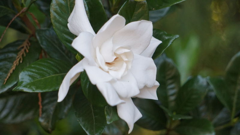 Flower Plant Nature Beauty In Nature Itajubá marcoals Marcosantosfotografia