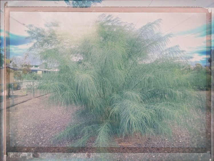Plant Tree Transfer Print Auto Post Production Filter Nature Day Growth No People Transparent Outdoors Glass - Material Beauty In Nature Reflection Tranquility Window Tranquil Scene Water Palm Tree Tropical Climate Digital Composite