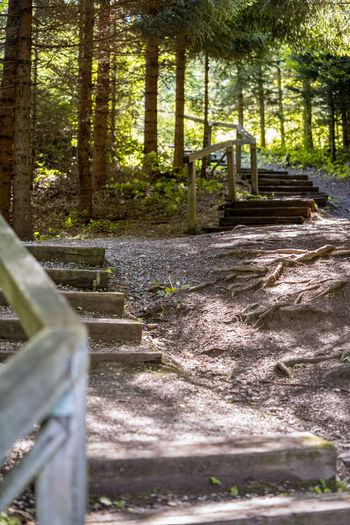 Staircase by trees in forest