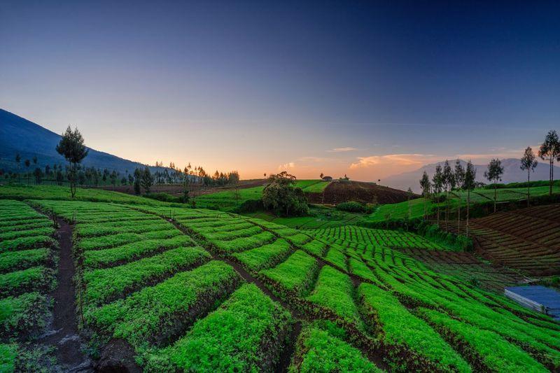 Farming Sky