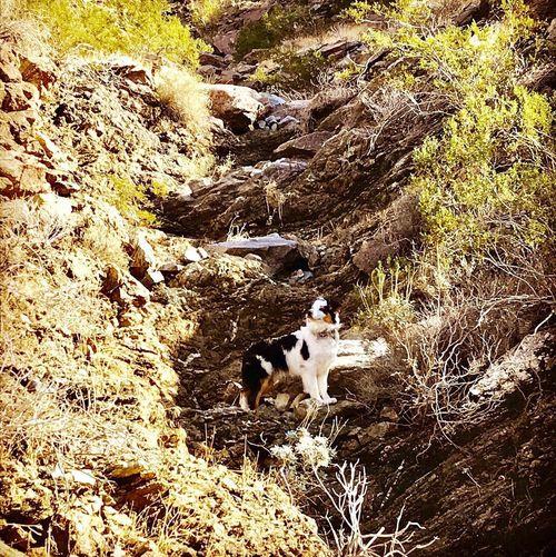Hike Nature