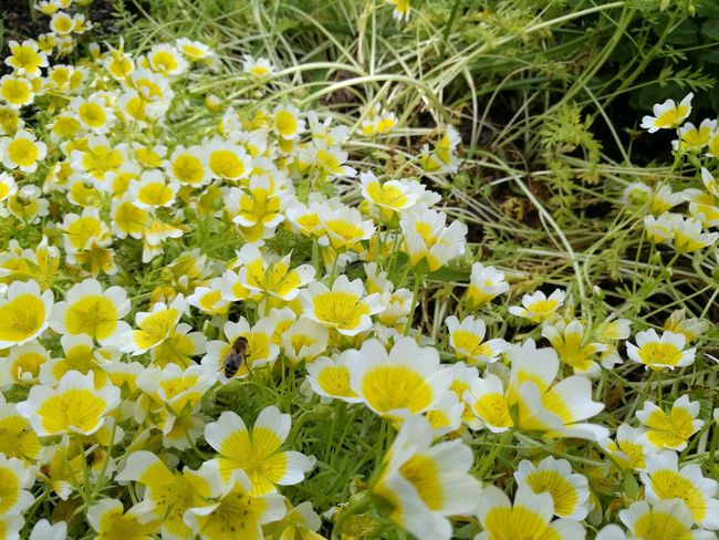 Flower Nature Growth Fragility Freshness Beauty In Nature Plant Field Petal Day Botany Uncultivated Outdoors Flower Head Yellow No People Springtime Grass Close-up Blooming