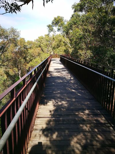 Railing Footbridge The Way Forward Outdoors Sunlight Tree Day Bridge - Man Made Structure Nature No People Shadow Beauty In Nature Sky Kings Park And Botanical Garden Perth Australia HuaweiP9 HuaweiP9Photography Australian Native Trees