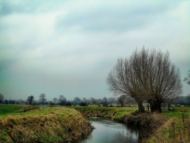 Tree Nature Water Outdoors Tranquility Sky Growth River No People Beauty In Nature Grass Landscape Somerset Levels Uk Willow Trees Nature Rural Scene